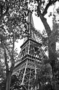 Paris Metal Prints - Paris Eiffel Tower Metal Print by Phill Petrovic