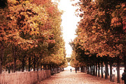 Autumn Photos Posters - Paris Tuileries Row of Trees - Jardin des Tuileries Autumn Fall Colors Tree Landscape  Poster by Kathy Fornal
