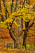 Park Benches Prints - Park Bench In Autumn Print by Gary Harris