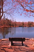 Park Benches Photos - Park Bench in Spring by John Malone