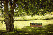 Park Bench Prints - Park bench under tree Print by Elena Elisseeva