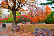 Park Benches Photo Originals - Park Benches by Luminita Suse