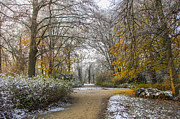 Patricia Hofmeester - Park in fall with snow
