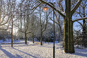 Patricia Hofmeester - Park in the snow