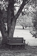 Park Benches Framed Prints - Park It Framed Print by Lindy Spencer
