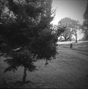 Woods Photos - Park by Les Cunliffe