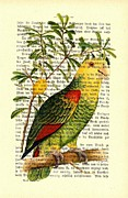 Parakeet Mixed Media Posters - Parrot and Lemon Poster by Little Vintage Chest