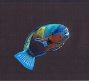 Tropical Fish Drawings Posters - Parrot Fish Poster by Grace