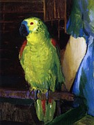 Oil Paint Framed Prints - Parrot Framed Print by George Wesley Bellows
