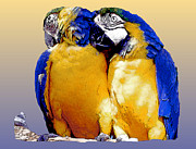 Couples Prints - Parrot Passion 1 Print by Linda  Parker