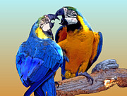 Couples Prints - Parrot Passion 2 Print by Linda  Parker