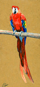 Rainforest Paintings - Parrot Perch by Alice Leggett