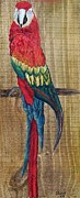 Canary Mixed Media Metal Prints - Parrot - Scarlet Macaw Metal Print by Eloise Schneider