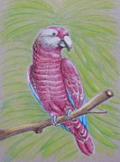 Talking Pastels Metal Prints - Parrot Metal Print by Thuraya R