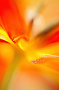 Parrot Tulip Abstract Print by Salwa  Afef
