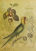 Sarah Vernon Framed Prints - Parrot with Plums Framed Print by Sarah Vernon
