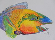 Parrotfish Painting Framed Prints - Parrotfish Framed Print by Connie Campbell Rosenthal
