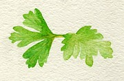 Annemeet Van der Leij - Parsley