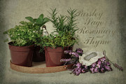 Fragrant Flowers Prints - Parsley Sage Rosemary and Thyme Print by Robin-lee Vieira