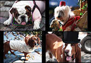 Basset Hound Photos - Party Dogs Collage by John Rizzuto