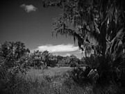 Pasco County Prints - Pasco Number 2 Print by Phil Penne