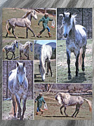 Forelock Photo Posters - Paso Fino Stallion Horsing Around Poster by Patricia Keller