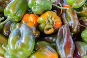 Green Grocer Prints - Passel of Peppers Print by Susan Colby