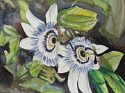 Passiflora Originals - Passiflora Cerulia by Betty-Anne McDonald