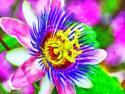Passiflora Digital Art Metal Prints - Passiflora Edulis otherwise known as Passion Flower Metal Print by Digital Photographic Arts
