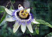 Passiflora Digital Art Metal Prints - Passion Flower 1 Metal Print by Helene U Taylor