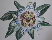 Passion Drawings Posters - Passion Flower Poster by Gitta Brewster
