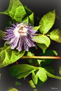 Barry Jones - Passion Flower-II