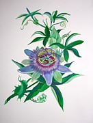 Passiflora Paintings - Passion Flower by Tracey Harrington-Simpson