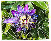 Passion Fruit Digital Art Posters - Passion fruit flower Poster by Nato  Gomes