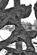 Barbed Wire Fences Prints - Passion Print by Giorgio Galeotti
