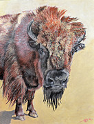 American Bison Pastels Prints - Pastel Buffalo Stare Print by Ann Marie Chaffin