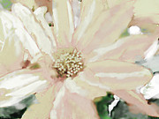 Blank Greeting Card Prints - Pastel Daisy Photoart Print by Debbie Portwood