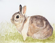 Rabbit Pastels Posters - Pastel Pet Rabbit Poster by Kate Sumners