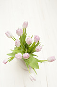 Pale Pink Posters - Pastel Pink Tulips Poster by Anne Gilbert