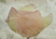 Lynn Bolt - Pastel Textured Rose