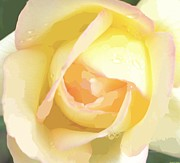 Guest Painting Prints - Pastel Yellow Rose  Print by Rosemarie E Seppala
