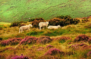 Lush Vegetation Posters - Pastoral Scene II. Wicklow. Ireland Poster by Jenny Rainbow