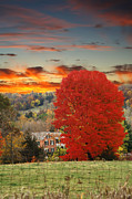 Randall Branham - Pasture hard rock maple red sky