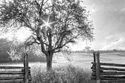 Autumn Scenes Metal Prints - Pastures in Black and White Metal Print by Debra and Dave Vanderlaan