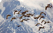 Birds - Patagonia Migration by Mircea Costina Photography