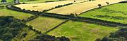 Jane McIlroy - Patchwork Fields