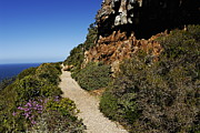 Western Cape Posters - Path at Cape of Good Hope Poster by Sami Sarkis