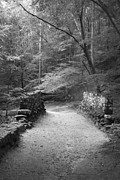 Kelly Prints - Path in Black and White Print by Kelly Hazel