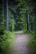 Path Photo Posters - Path in dark forest Poster by Elena Elisseeva