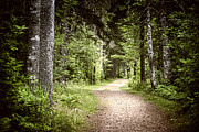 Gloomy Metal Prints - Path in green forest Metal Print by Elena Elisseeva